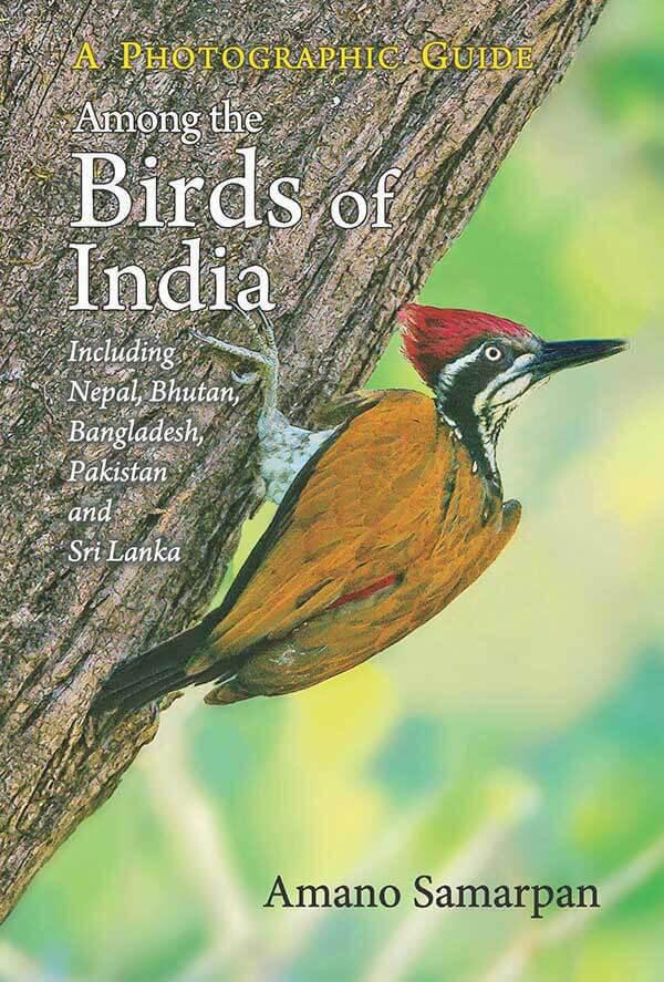 Among The Birds Of India: Photographic Guide ( Including Nepal, Bhutan, Bangladesh, Pakistan And Sri Lanka)