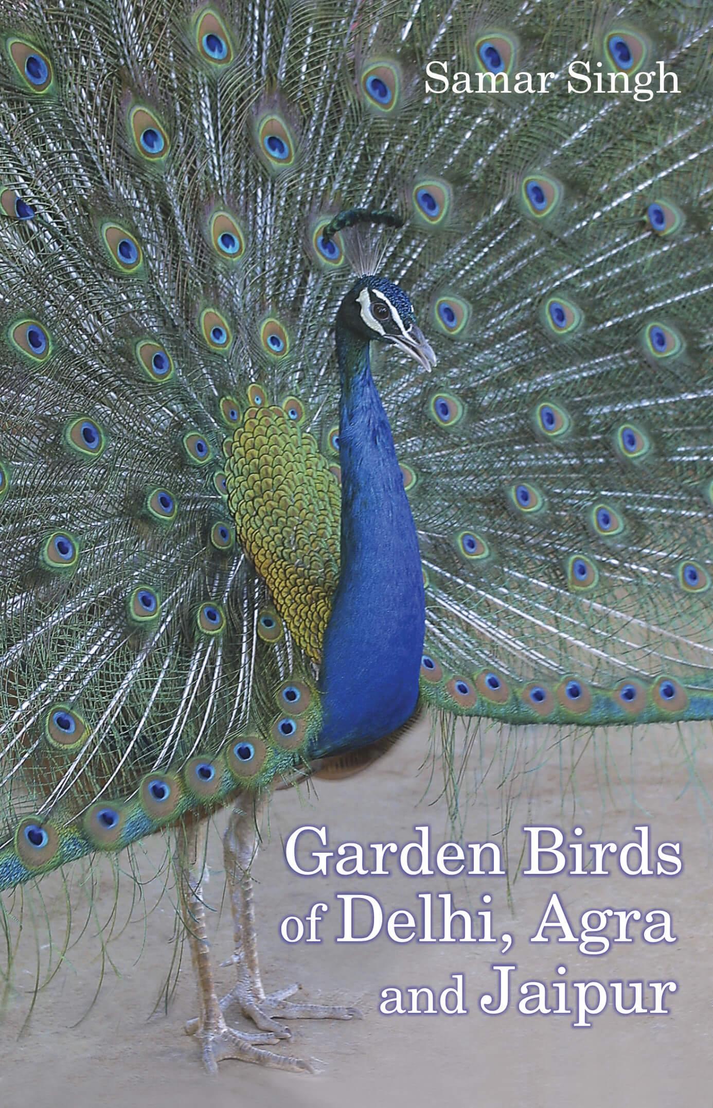 Garden Birds Of Delhi, Agra & Jaipur