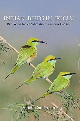 Indian Birds In Focus